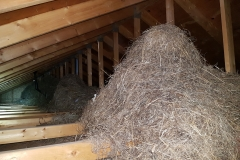Straw piles in the attic